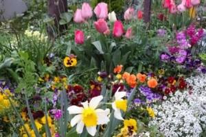 spring flower 2016